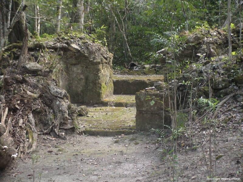 Mayan Societal Collapses