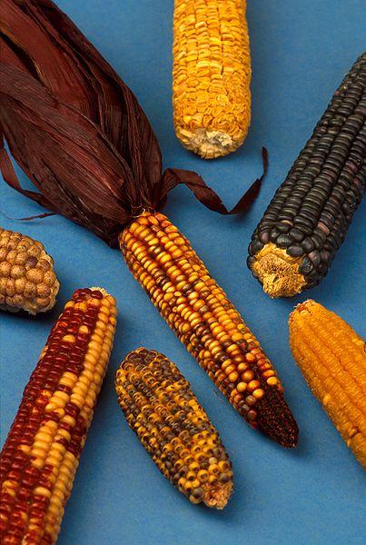 Mayan Farming And Maya Agricultural Methods History