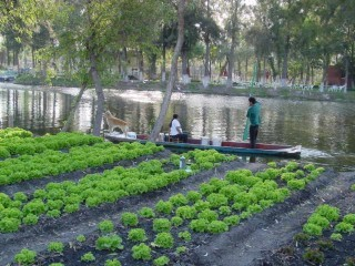 Aztec Agriculture: Floating Farms Fed the People