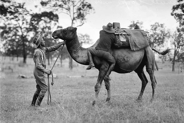 us camel corps